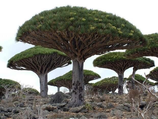 Самые странные деревья вмире