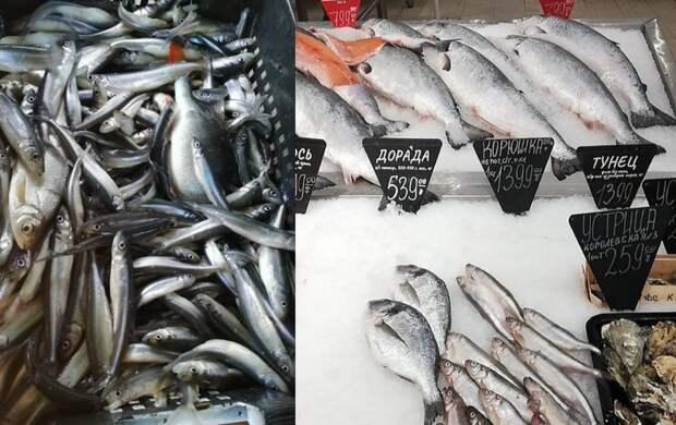 В Петербурге стартовал сезон корюшки: где в городе найти огуречную рыбку