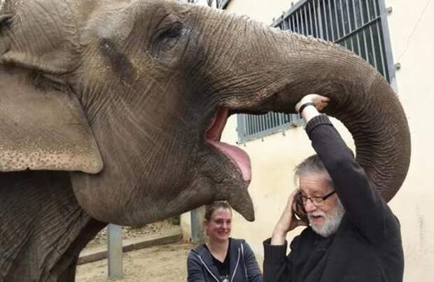 Мужчина нашёл слона, за которым ухаживал 32 года назад, — и слон его узнал!