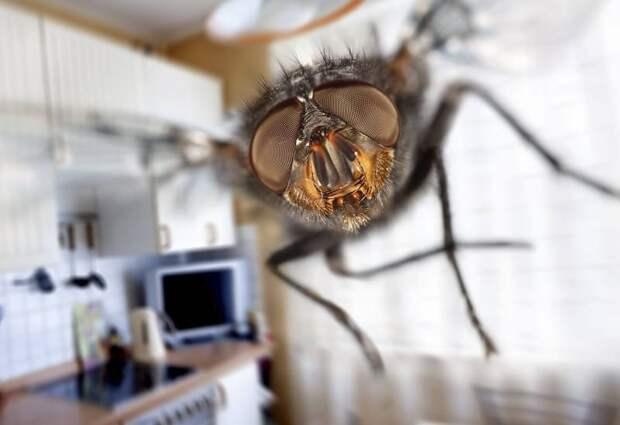 Как сделать ловушку для мух?