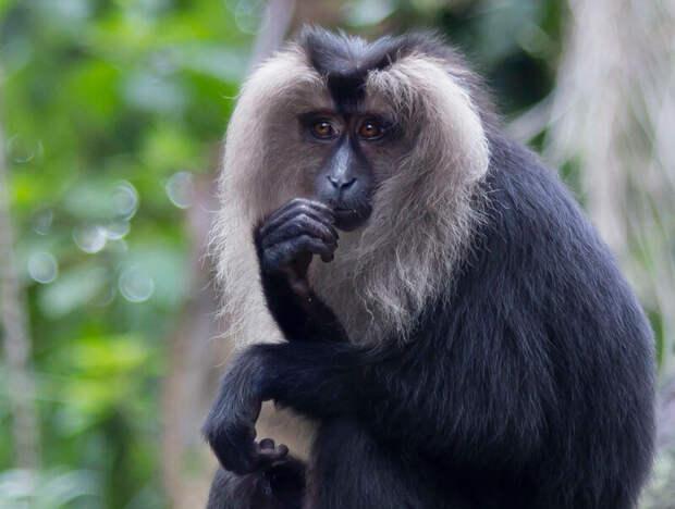 Красивая обезьяна в мире