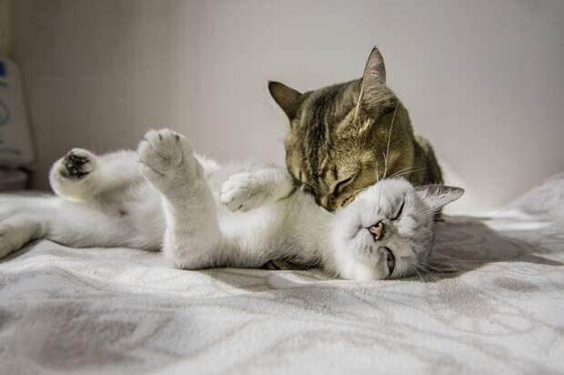 Эти животные докажут вам, что любовь - это прекрасное и светлое чувство!