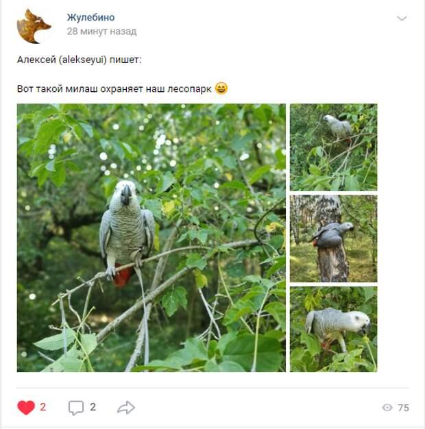 Фото дня: как в Жулебинском лесопарке попугая выгуливали