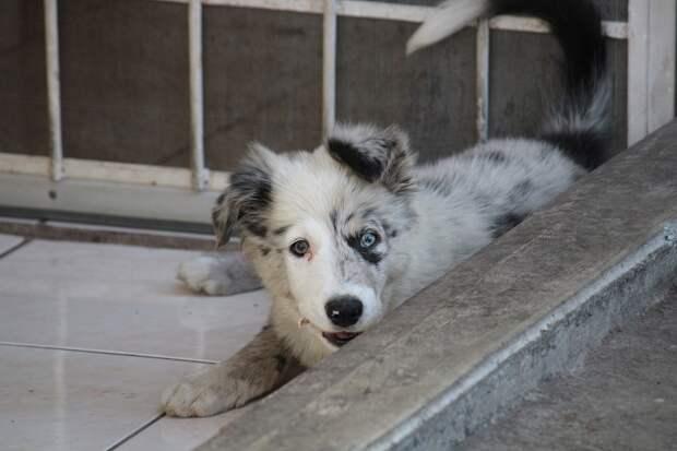 Почему собака скулит: основные причины