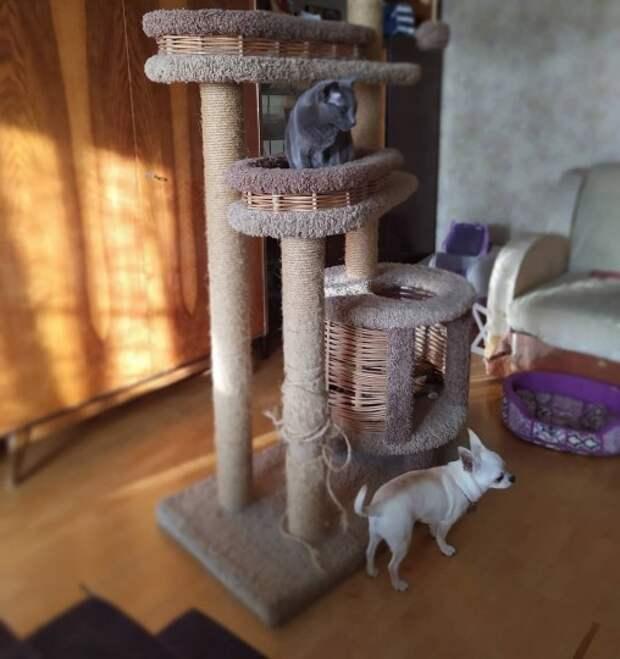 Вертикальная территория очень важна кошкам и может занимать много места