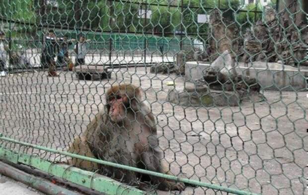 Странный вор в зоопарке