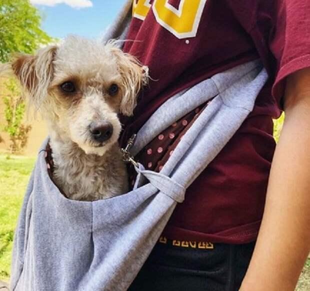 Собачка в сумке