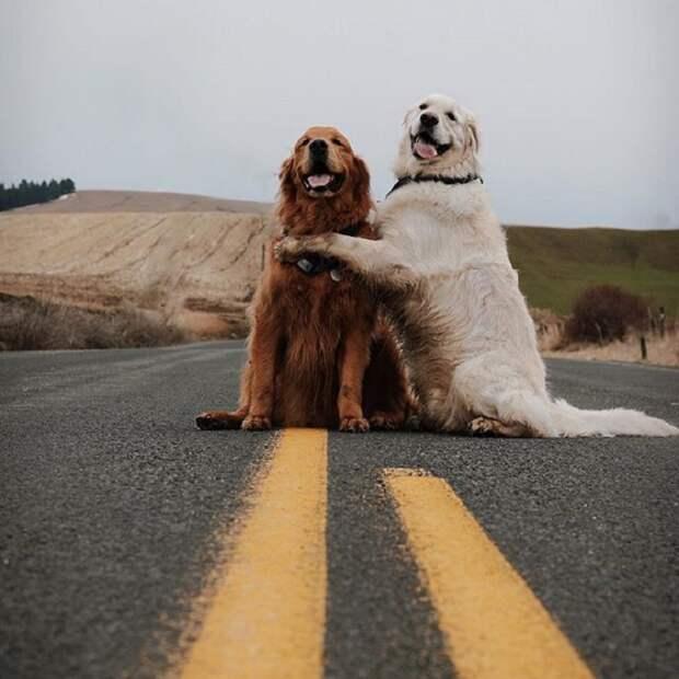 Позитивная парочка, Уотсон и Кико, любят много времени проводить вместе.