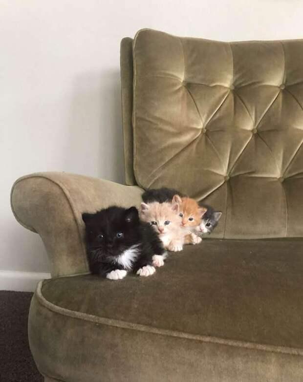 Котята знают, как «звучит» еда, и едва девушка соберется перекусить, они уже тут как тут