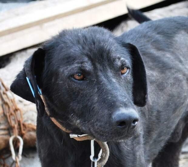 Изгой среди людей и собак: Ромка и его трудный путь к исцелению!