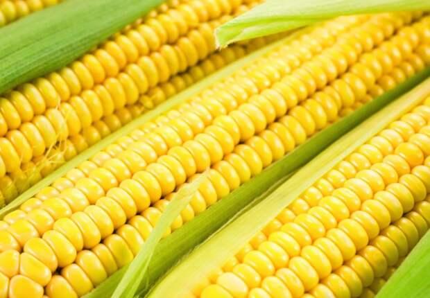 Правительство уточнило размер вывозных пошлин на пшеницу, ячмень и кукурузу
