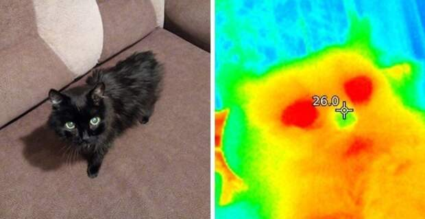 Берегите родных и тепло! Как привычные вещи выглядят через тепловизор