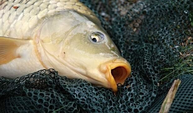 Под Оренбургом планируют построить завод поразведению рыбы