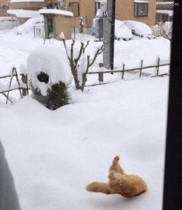 Начинаем сезон отмороженной ржаки