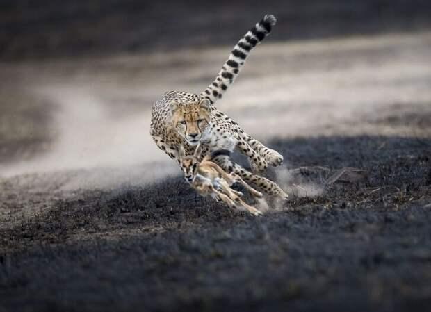 Лучшие фотографии от National Geographic в 2018 году national geographic, конкурс, фото года