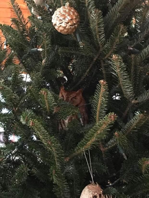 Американская семья купила себе елку на Рождество с маленьким сюрпризом