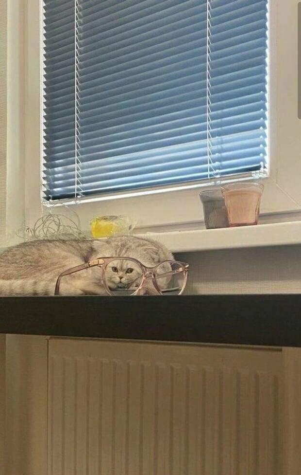 Котик с малюсенькой мордочкой