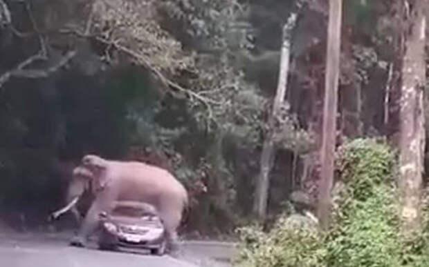 Жесткая какая у вас подвеска! – Слон прилег на машину