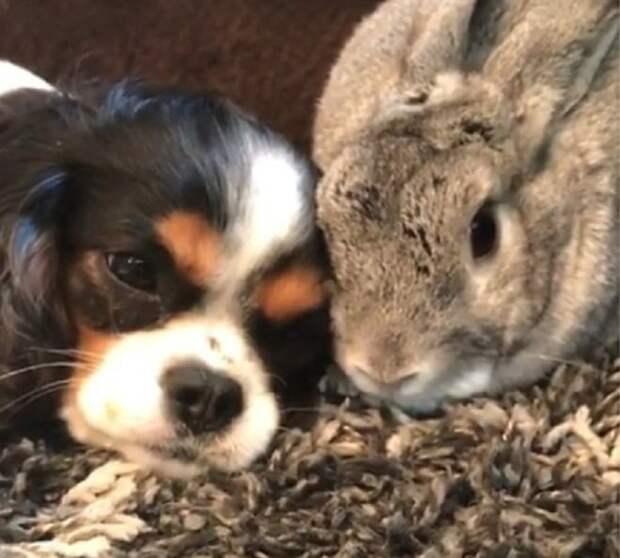 Собака лежит возле кролика