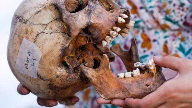 Новосибирские ученые определили диету алтайских неандертальцев по зубам