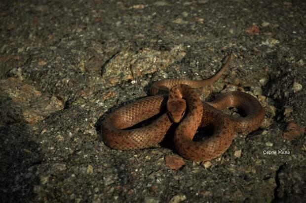 Фото змеи 4
