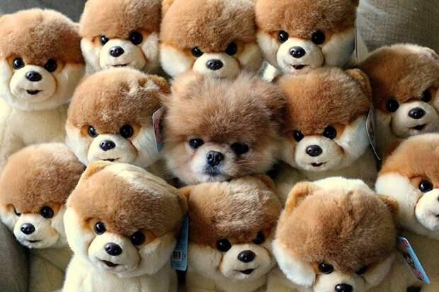 Эти животные думают что они мастера маскировки ))