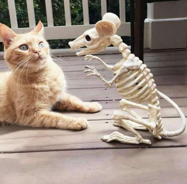 Наверное, коту видится так