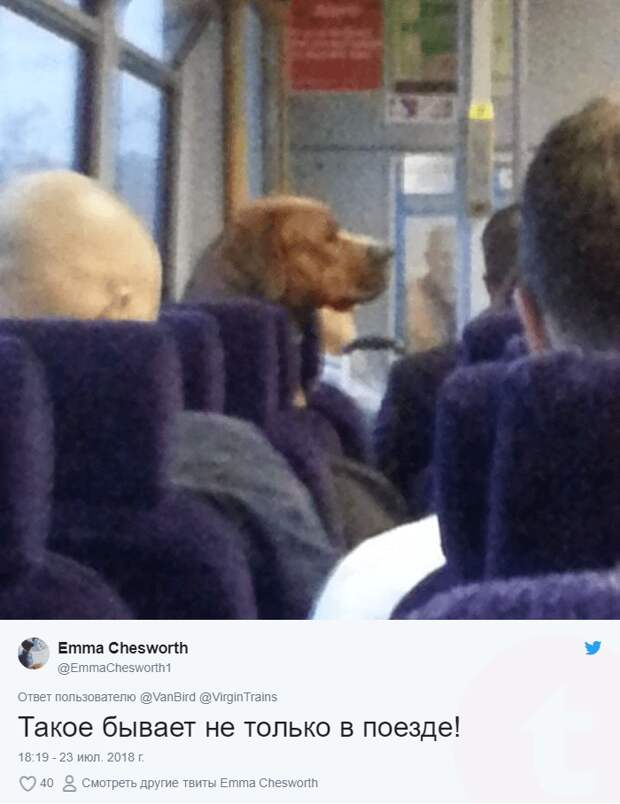 собака в транспорте