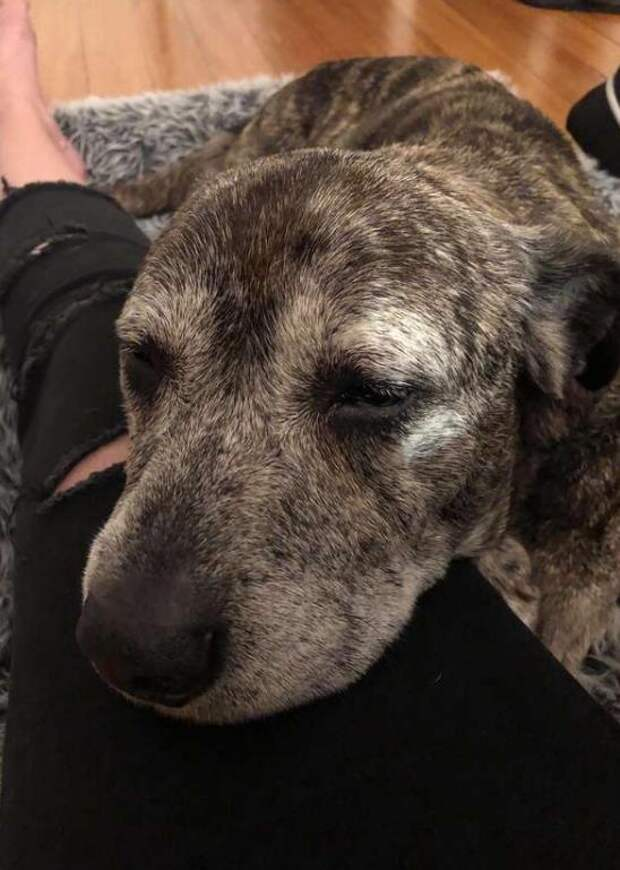 Маленький грустный пёсик потерял свою семью и надежду опять стать любимым!