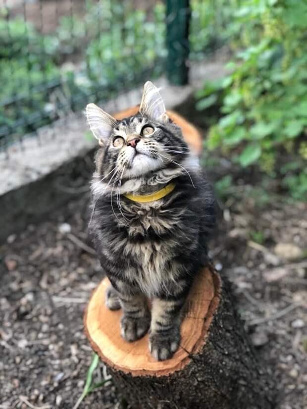 Как и где искать пропавшую кошку?
