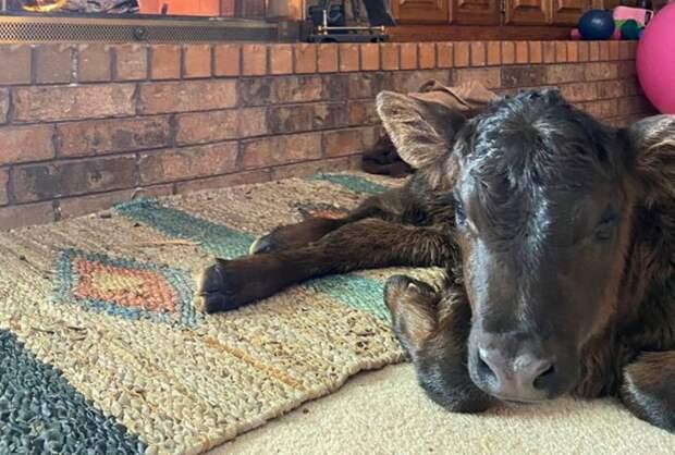 Фермеры в США пустили коров, овец и гусей в свои дома из-за сильных морозов