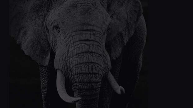 Это были снимки шотландского фотографа дикой природы David Yarrow из его книги