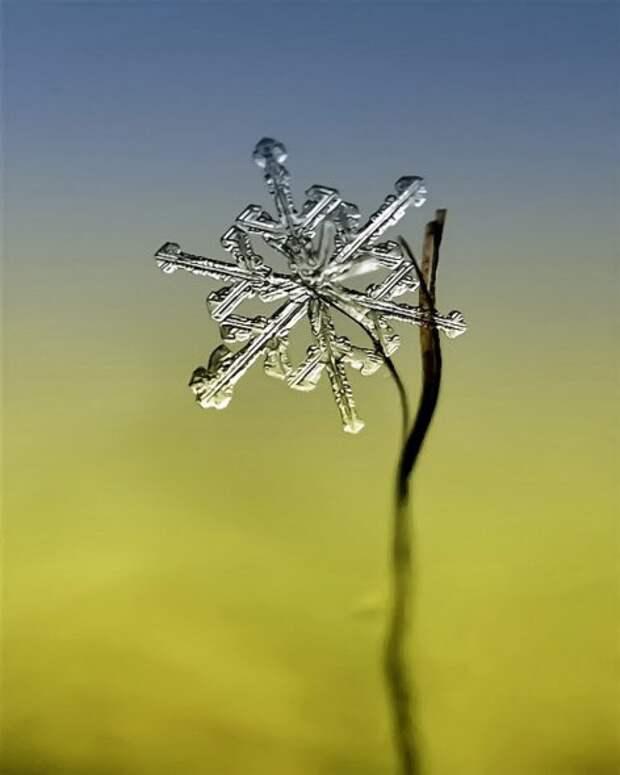 Снежно-ледяное макро Андрея Осокина