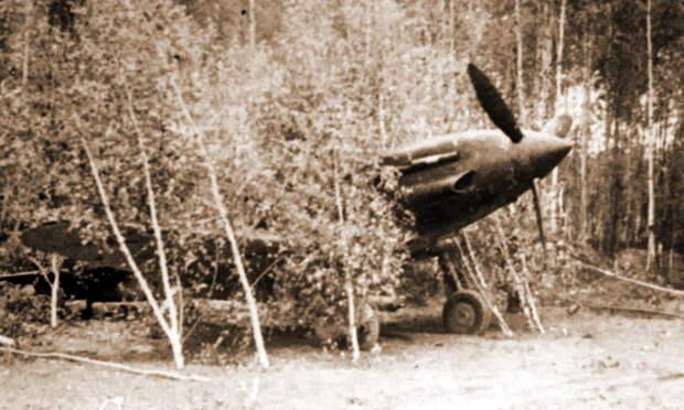 Истребитель МиГ-3 129-го ИАП, замаскированный на аэродроме, лето 1941 года. - «Чёрная смерть» против «Дивизии-призрака»   Военно-исторический портал Warspot.ru