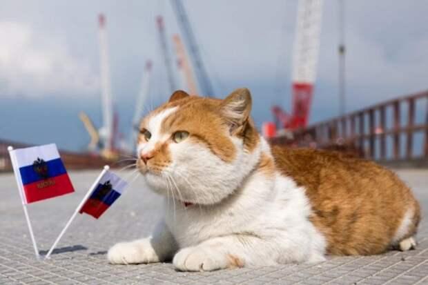 Кот Мостик проверил готовность Крымского моста (ФОТО)