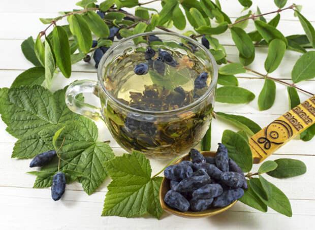 Жимолость: полезные свойства ягод и 5 лучших рецептов