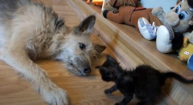 Этот собачий взгляд берёт за душу... // https://www.youtube.com/watch