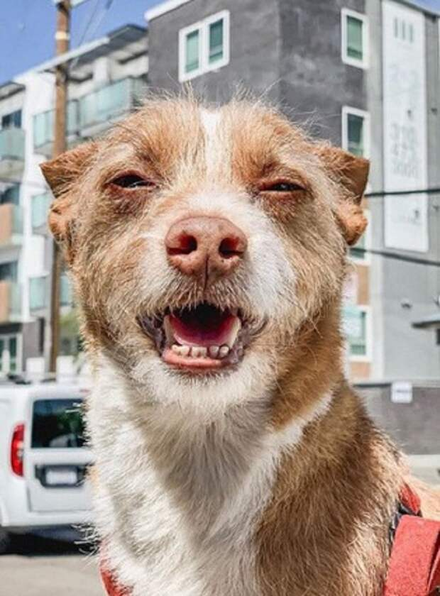Пёс бежал по проезжей части, а машины сигналили, чтобы не сбить его. Лишь один человек решил помочь животному