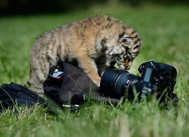 zhivotzaiyun 7 Лучшие фотографии животных со всего мира за неделю