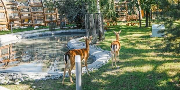 Собянин открыл Детский зоопарк после его комплексной реконструкции/mos.ru