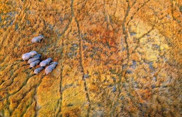 Дикая природа с высоты птичьего полета (15 фото)
