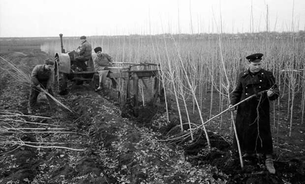 Почему в СССР в городах и вдоль дорог почти всегда сажали только тополя