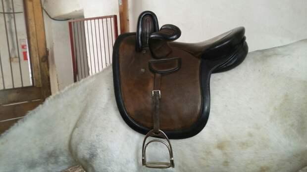 Седло для лошади: популярные разновидности и их особенности