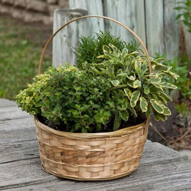herb-garden-inspirations8 (400x400, 189Kb)