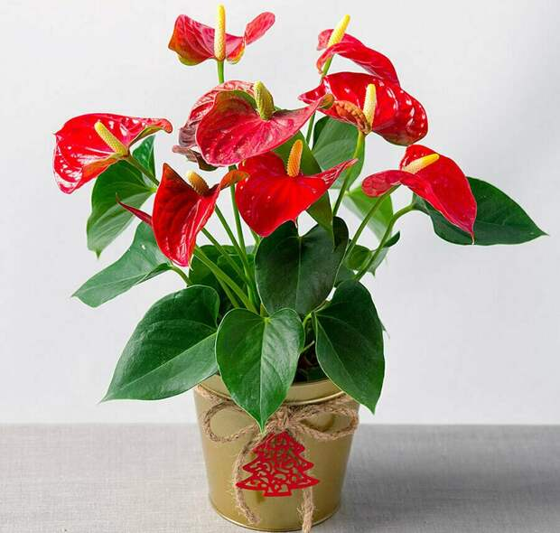 17 растений, которые в дикой среде не только гиганты, но еще и выглядят фантастически