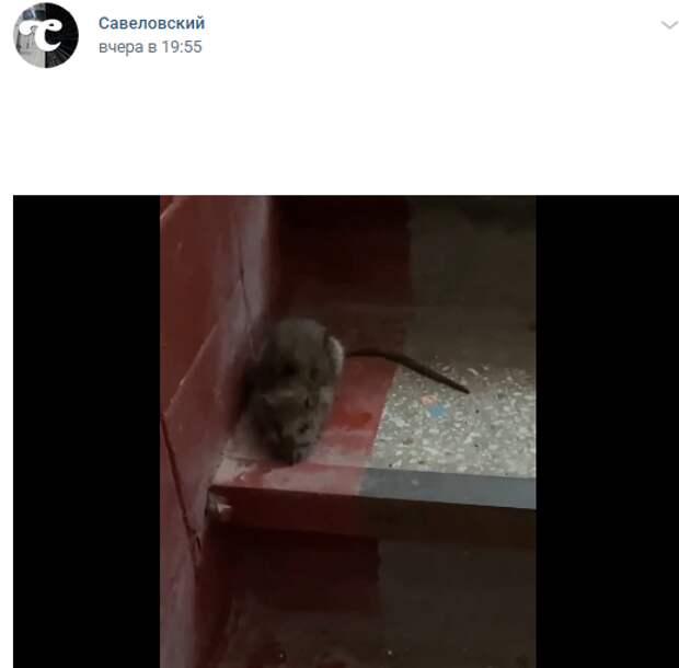 В подъезде дома на Юннатов проведена обработка против крыс