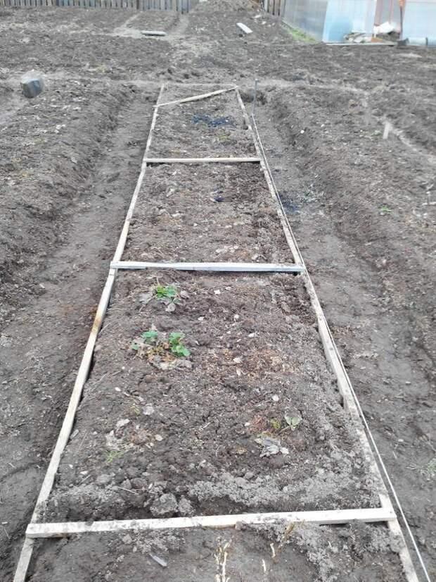 Как устроить капельный полив земляники на даче дача, земляника, капельный полив