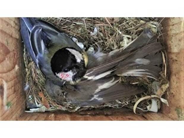 Глобальное потепление превращает птиц в жестоких убийц, выяснили ученые