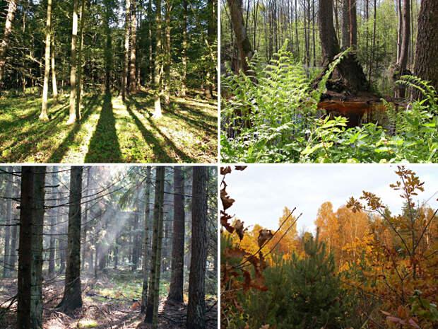 Самые красивые леса мира