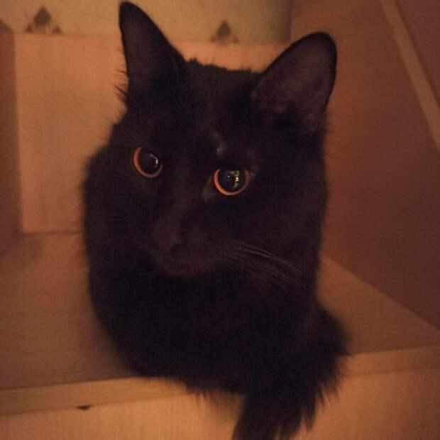В Хорошёво-Мнёвниках упавший на крышу почты кот не получил травм